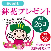 松菱百貨店大創業祭 ありがとうの気持ちを込めて 鉢花プレゼント